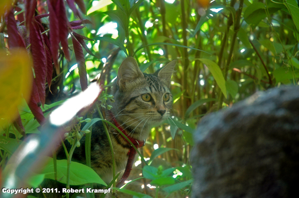 cat crouched in plants