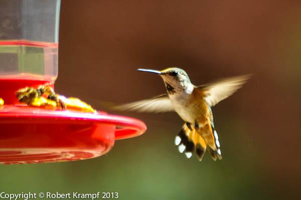 feeding bread to birds the happy scientist