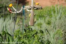 Bird feeder and grass-like plants