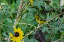 Small, yellow bird