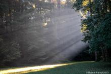 Light beams in the forest
