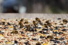 bees on bird seed